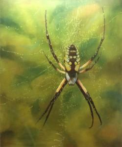 Spider-13